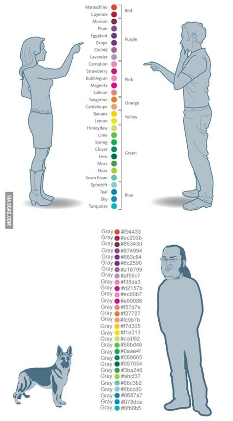 Colours according to women, men, dog and coders