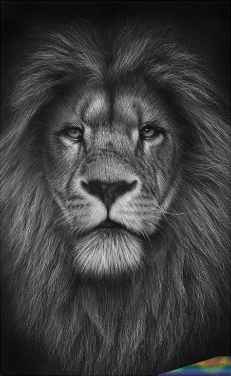 Pin auf Lion pictures