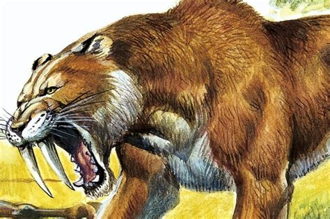 Reason behind sabre toothed tiger ice age extinction
