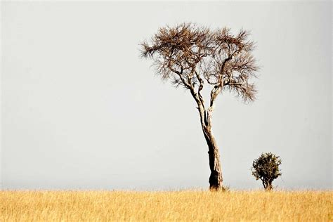 Kenya And South Africa Travel Tips 2012   Adventure Travel